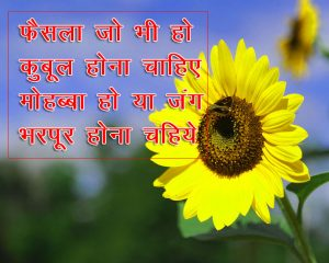 Hindi Shayari Images With Sunlower