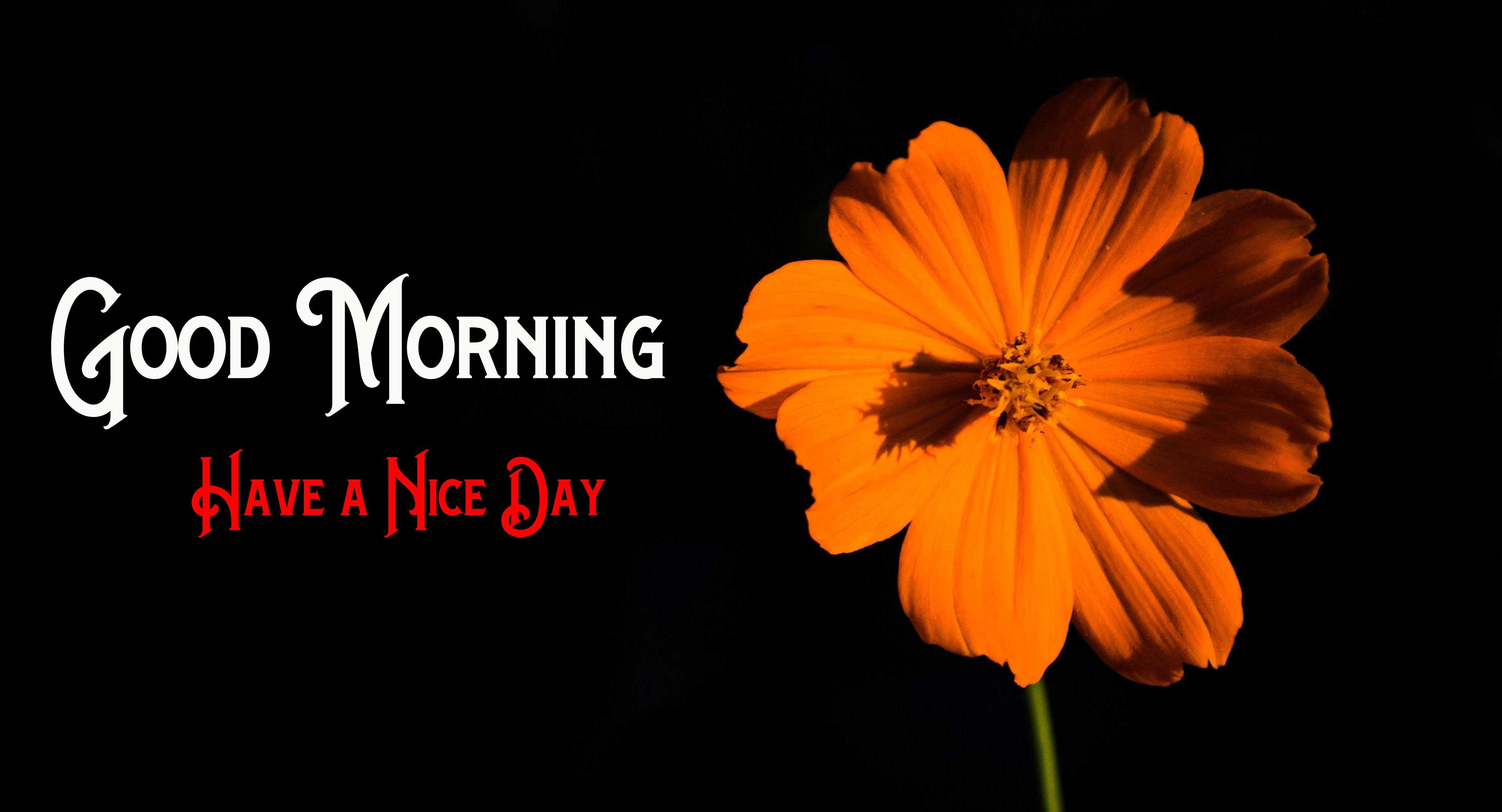Nature Flower Good Morning Images Download