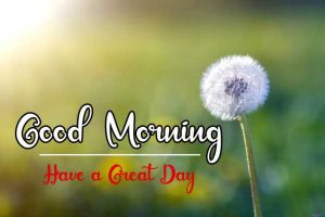 New Beautifu Good Morning Images pics free hd