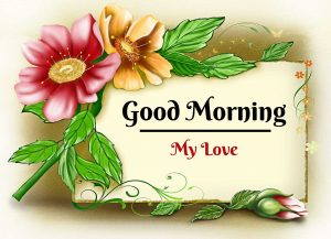 New Beautiful Flower Good Morning Images photo free download