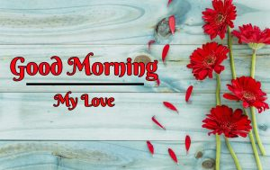 New Beautiful Flower Good Morning Images pics free download