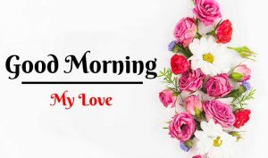 New Beautiful Flower Good Morning Images pics free hd