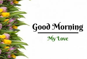 New Beautiful Flower Good Morning Images pics photo hd