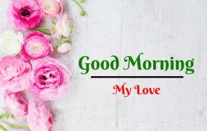 New Beautiful Flower Good Morning Images pictures download