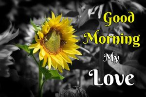 New Beautiful Flower Good Morning Images pictures free download