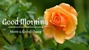 New Beautiful Good Morning Images photo free hd