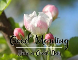 New Beautiful Good Morning Images pics download