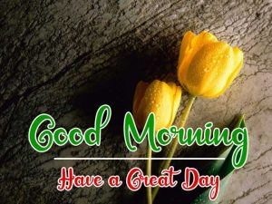 New Beautiful Good Morning Images pics for download