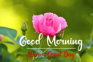New Beautiful Good Morning Images pics free download