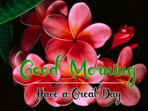 New Beautiful Good Morning Images pictures free download
