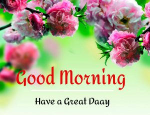 New Beautiful Good Morning Images pictures hd download