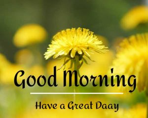 New Beautiful Good Morning Images wallpaper hd