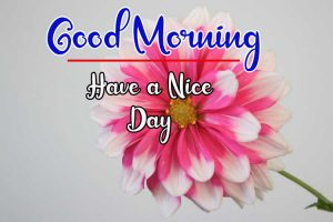 New Best Good Morning Images photo for download