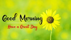 New Best Good Morning Images photo free hd