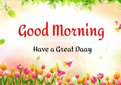 New Best Good Morning Images photo hd