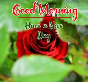New Best Good Morning Images pics for facebook
