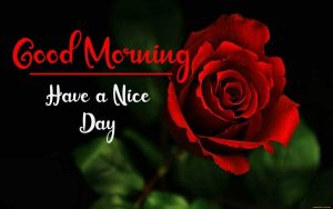 New Best Good Morning Images pics photo hd