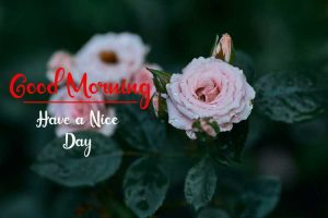 New Best Good Morning Images pictures for download