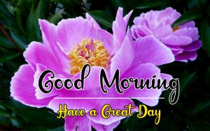 New Best Good Morning Images pictures pics hd