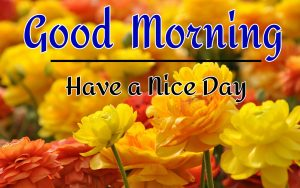 New Best Good Morning Images wallpaper for download