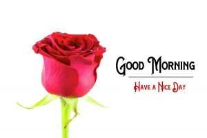 New Good Morning Images photo free download