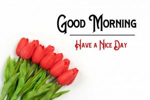 New Good Morning Images wallpaper free download