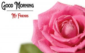 New Good Morning Images wallpaper photo free download