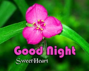 New Good Night Download Hd