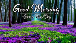 Quality Free p Good Morning Images Pics Download