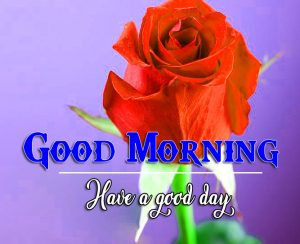 Red Rose p Good Morning Images Photo Download