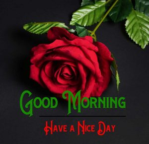Red Rose p Good Morning Images Pics D