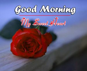 Red Rose Beautiful Good Morning Images Pics