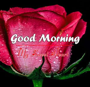 Red Rose Good Morning Images Pics for GF