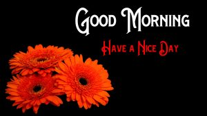 Red Rose Good Morning Pics Download