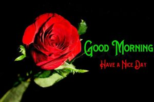 Red Rose Good Morning Pics Images Download