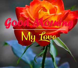 Red Rose Romantic Good Morning Images Pics Download