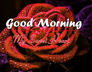 Red rose Love Couple Good Morning Wishes Images Download
