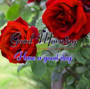 Romantic Good Morning Images Wallpaper With Rose