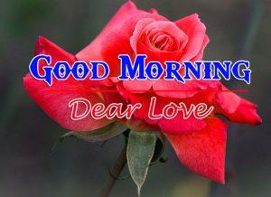 Rose p Good Morning Images Pics Download