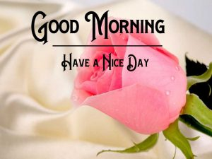 Rose Free p Good Morning Images Pics Download