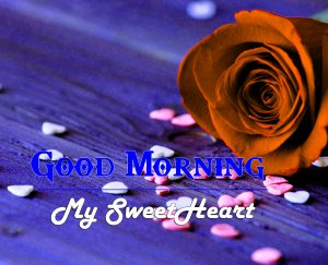 Rose Romantic Good Morning Images Pics Download