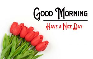 With Flower Good Morning Images Download