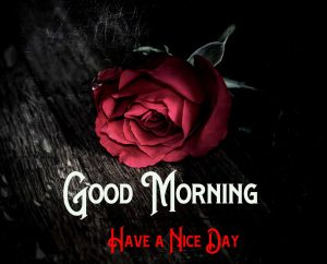 With HD Red Rose Good Morning Pics Download