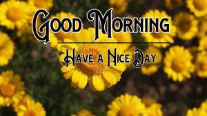 Yellow Flower Good Morning Images Download