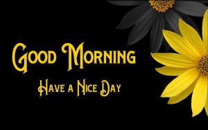 Yellow Flower Good Morning Pics Download