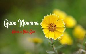 Yellow Rose p Good Morning Pics Download