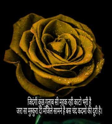Best Shayari Whatsapp DP Photo Images