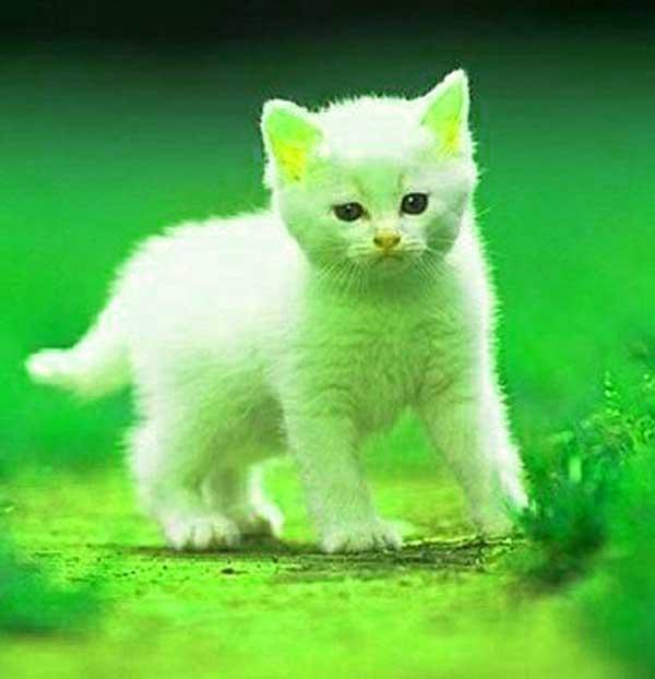 Cute Whatsapp DP Free Hd pHOTO