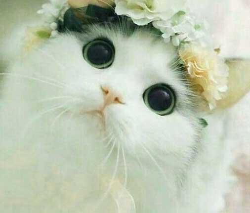 Cute Whatsapp DP Free Photo