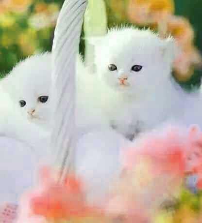 Cute Whatsapp DP Hd Free Photo